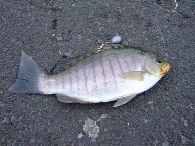 49-11fishing1.JPG