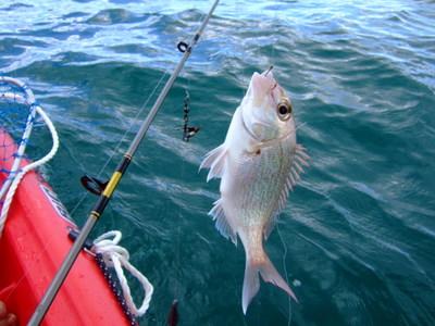 49-11fishing4.JPG